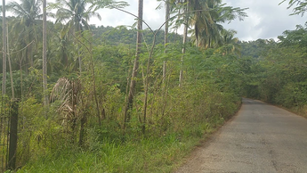 Large Agricultural Lot - Storhill, St. Catherine
