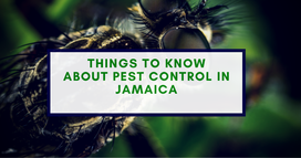 Things to Know About Pest Control in Jamaica